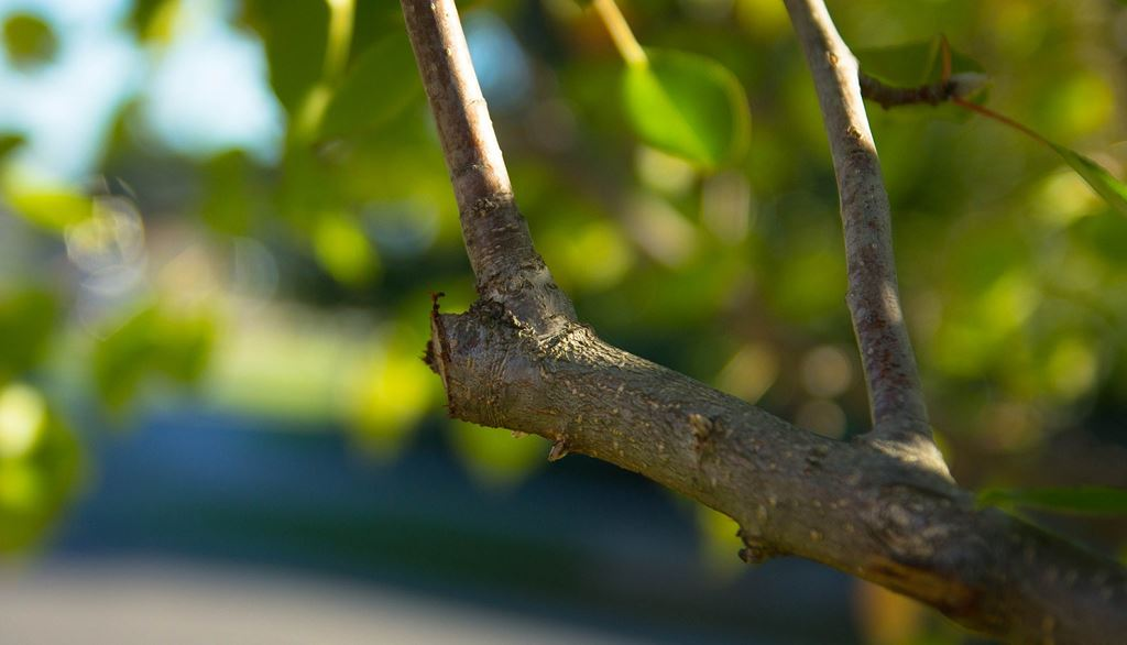 pruned branch of a tree